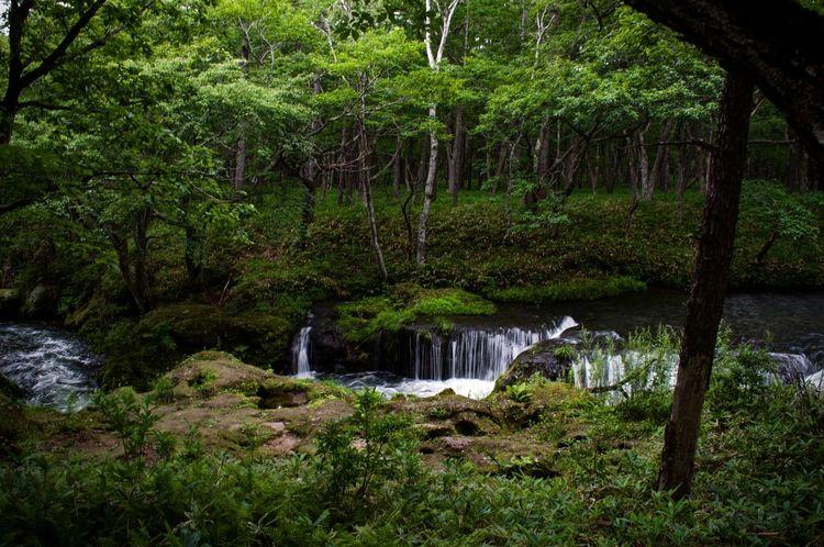 Nikko Nature Water Green Color Beauty In Nature Forest Japan No People Okunikko SenjōgaharaWald 戦場ヶ原 日光 奥日光 森 森林 川 大自然 Landscape Followme Coregraphy ファインダー越しの私の世界 写真好きな人と繋がりたい Lanfschaft Natur