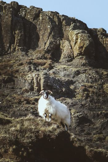 White cat on rock formation on land