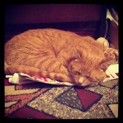 cat pictures : Žulendaraaaa