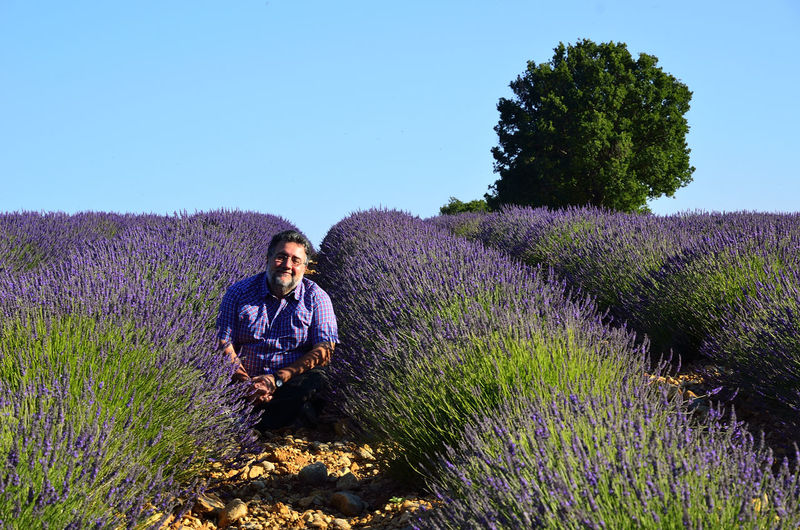 Portrait Of Man Sitting Amidst Lavender Field Against Clear Blue Sky