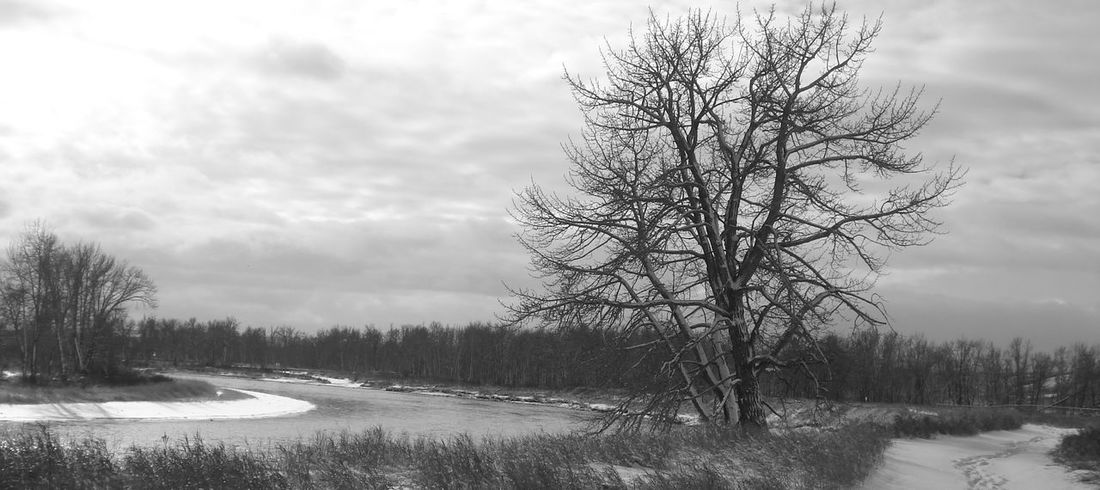 Winter river walk, lone tree, black & white Black & White Lone Tree Outdoor Photography Pathways River Bends Riverbank Snowy Days... Winter