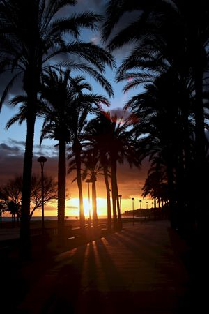 Sunset_collection Vilanova I La Geltru Beauty In Nature Clouds And Sky Day Growth Nature No People Outdoors Palm Tree Scenics Silhouette Sky Sunset Tranquil Scene Tranquility Tree Tree Trunk
