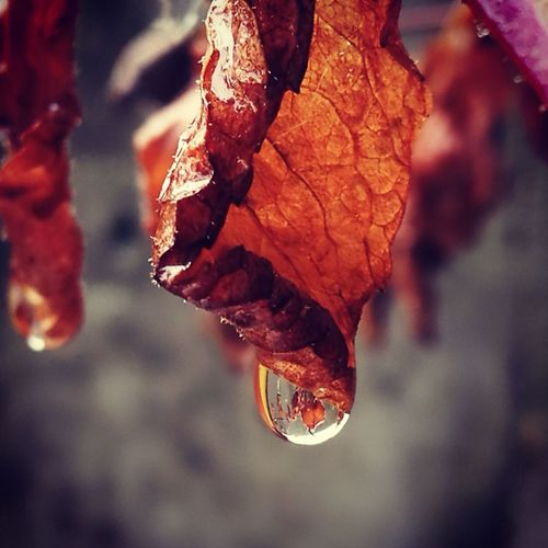 rain... My Best Photo Leaf Autumn Dried Fruit Change Close-up Leaf Vein Rotten Droplet Wilted Plant Water Drop Dead Plant Dried Plant