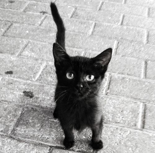 Cat Kitten Cat Lovers BLackCat