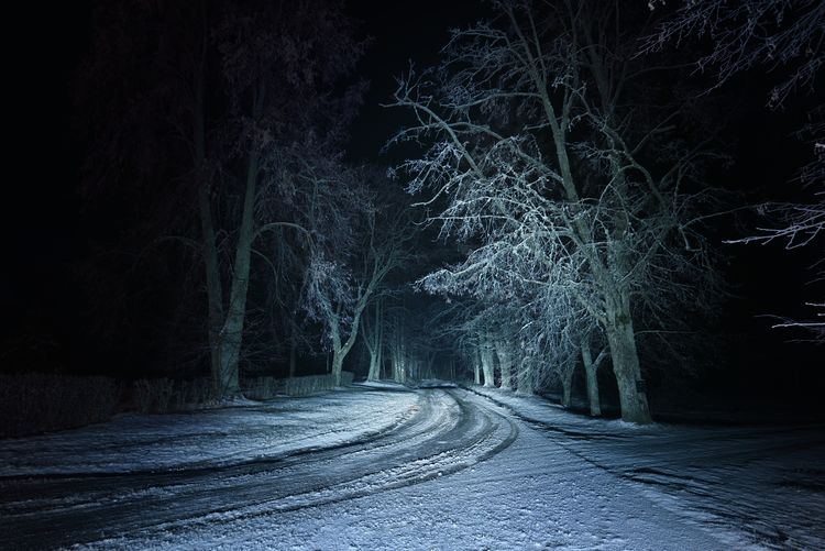 Empty road amidst trees in forest during winter