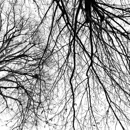 Tree Low Angle View No People Sky Nature Branch Full Frame Close-up Growth Backgrounds Beauty In Nature Outdoors Black And White Graphic Winter