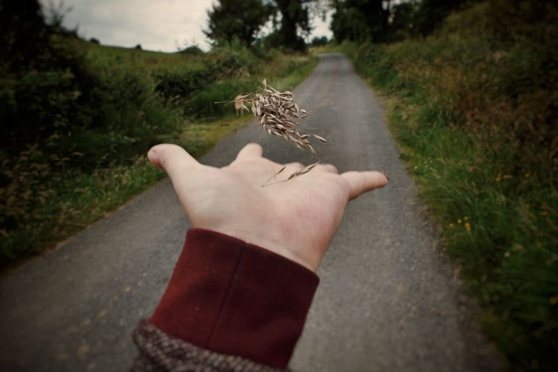 Sowing Seeds Seeds Tossed Throwing  Human Body Part Human Hand Personal Perspective Human Arm One Person One Animal Water People Adult Outdoors Day Adults Only Nature One Man Only Mammal Mix Yourself A Good Time Inner Power Visual Creativity