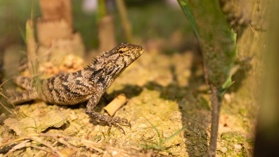 Animal Themes Animal One Animal Reptile Animal Wildlife Animals In The Wild Vertebrate Lizard Nature Side View No People Sunlight Close-up Plant Selective Focus Focus On Foreground Outdoors