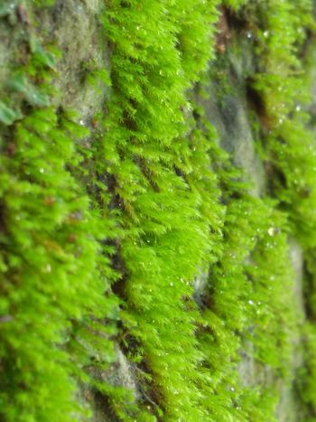 Fresh And Clean Flowers, Nature And Beauty Lichen Waterfall Leaves🌿 Beauty In Nature Nature Photography Lush - Description Fern Frond Leaf Lush Foliage Forest Close-up Plant Green Color