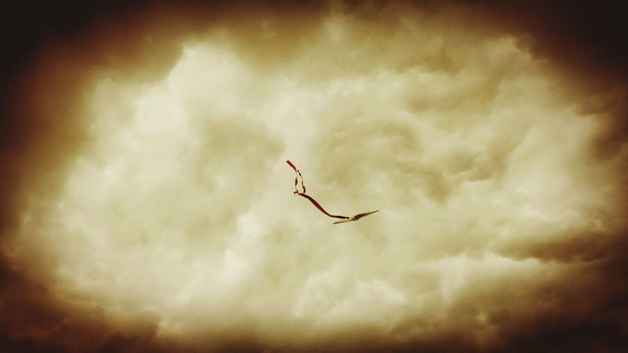 Fly high..... Sepia_collection Sepia September Kite Drachenfest Drachensteigen Let's Go Fly A Kite Autumn Colors Autumn Is Coming Autumn 2015