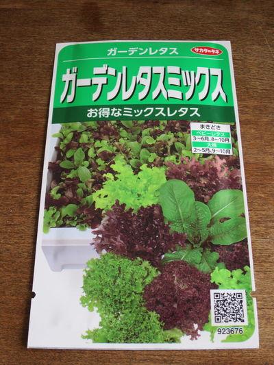 今夏の挑戦 レタス 水耕栽培