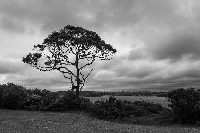 The tree Monochrome Black And White Light And Shadow Plant Tree Sky Cloud - Sky Beauty In Nature Growth Nature Tranquility Tranquil Scene Landscape Scenics - Nature Environment Land Day Non-urban Scene Grass Outdoors No People
