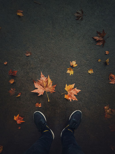 Autumn season lifestyle. high angle view of man feet on the asphalt road with fallen maple leaves