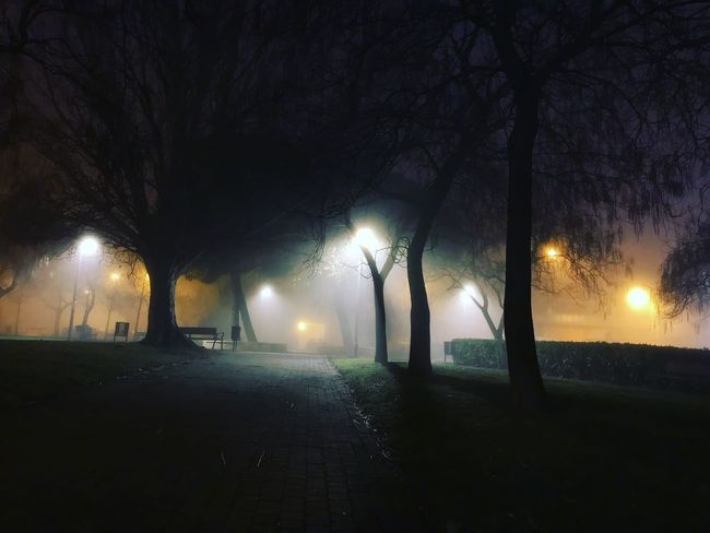 Streetphotography City Life Darknes Darkness And Light Wintertime Winter Night Illuminated Street Light Lighting Equipment Tree Outdoors No People Nature Fog Beauty In Nature Sky The Way Forward