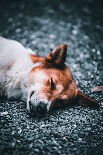 Close-up of a dog sleeping