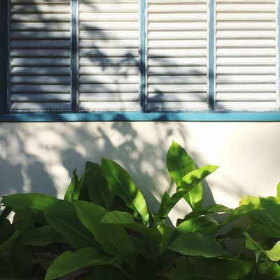 color palette Leaf Sunlight Plant Part Day Plant Nature Shadow Green Color No People Built Structure Architecture Building Exterior Growth Wall - Building Feature Pattern Close-up Outdoors Wood - Material Window Metal