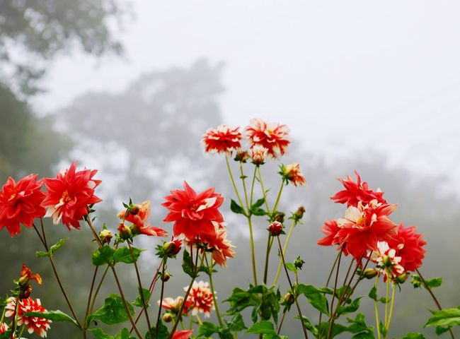 "A pesar de la neblina !!! Belleza Natural"" Flower Plant Freshness Growth"