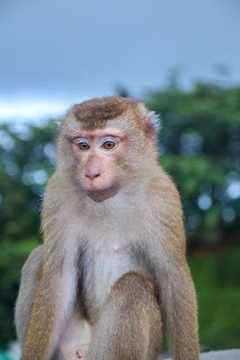 Portrait of monkey sitting outdoors