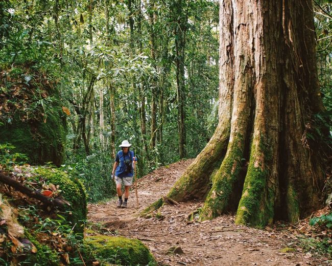 Some Trees are bigger than others Hiking Costa Rica Rainforest Recreational Pursuit Travel Vscocam TreePorn Tree