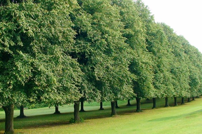 Green Green Color Green Green Green!  Trees Grass Grass Nice View No People Stormont Stormont Estate Belfast Northern Ireland Plant Green Color In A Row Beauty In Nature Park - Man Made Space Outdoors Landscape Idyllic Growth Day Nature Tranquility Park Scenics - Nature Field