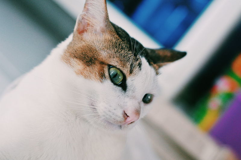 Neon EyeEmNewHere EyeEm Best Shots EyeEm Selects Cats Of EyeEm Pets Portrait Looking At Camera Beauty Domestic Cat Multi Colored Close-up Feline Cat At Home Ginger Cat Whisker Animal Eye Stray Animal Kitten