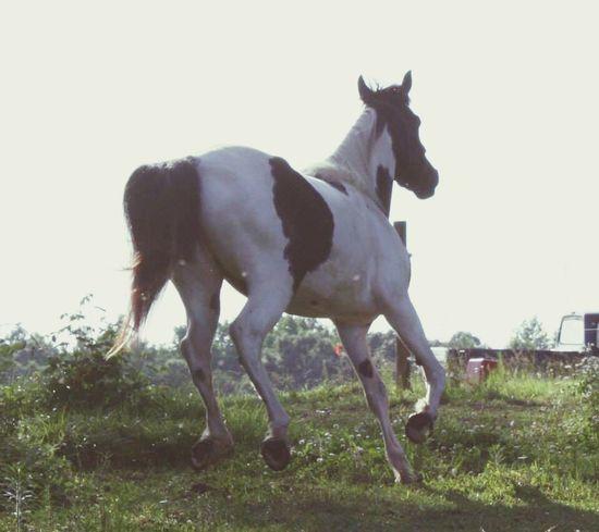 Girls Best Friend Rescue Horse