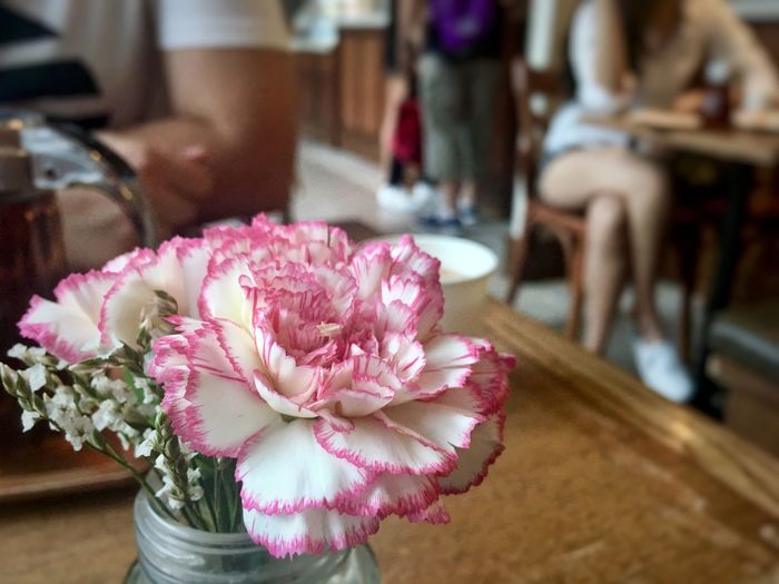 Flower Focus On Foreground Pink Color Prettycolours Flower Collection Cafe Coffee Time Cafés Coffee Shop Leisure Activity Leisure Time Canation