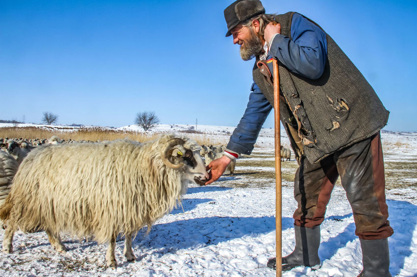 Shepherd Of The Sheep Adult Adults Only Agriculture Beard Day Domestic Animals Farmer Livestock Mammal Men Nature One Animal One Man Only One Person Only Men Outdoors People Real People Standing
