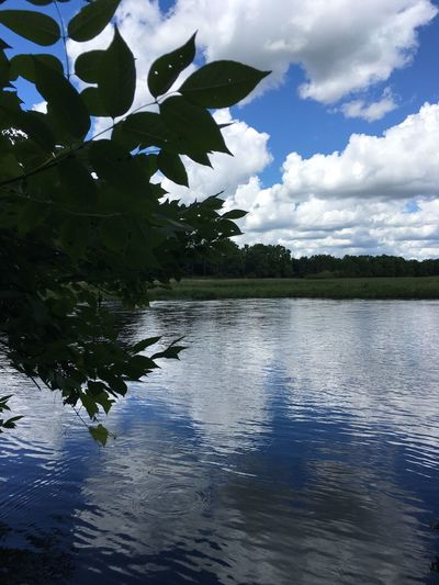Sky Blue Sky Clouds Clouds And Sky White Clouds Water River Reflection Reflections In The Water Tree Plant Leaf Growth Nature Beauty In Nature No People Tranquil Scene Tranquility Scenics Michigan Pure Michigan