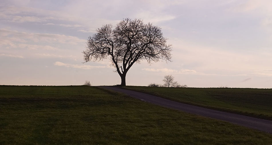 Single Tree Tree Meadow Ethereal Beauty In Nature Shadow Field Landscape Grass Nature No People Outdoors Day