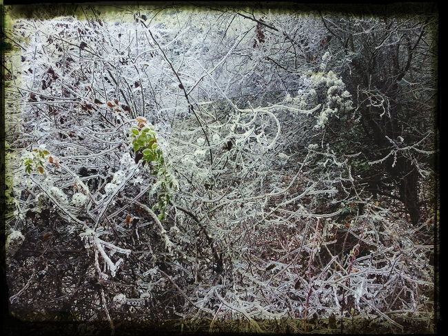 Ice Forest Nature Green winter