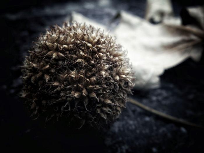 Seeds Autumn