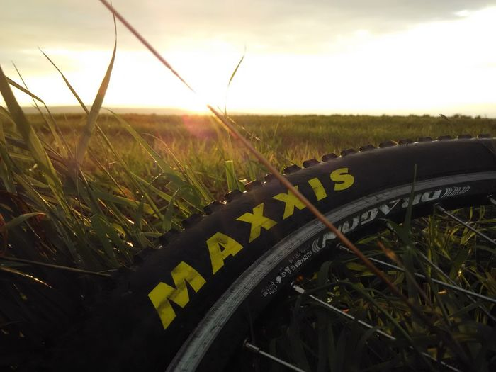 Maxxis In The Grass
