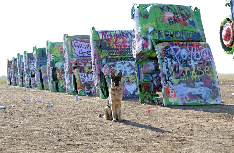 Cars & Dogs Animal Art Buried Cars Dog German Shepard Gsdofinstagram Tourist Attraction