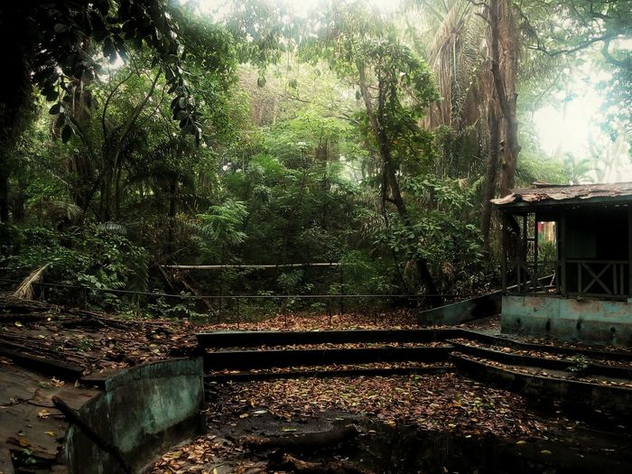 Hermoso Nature Nature_collection Peace Nicaragua Landscape Magical Encantador Naturaleza Outdoor Old Old Pool Fairy Garden Abandoned Places Abandoned Green Vibes Plants