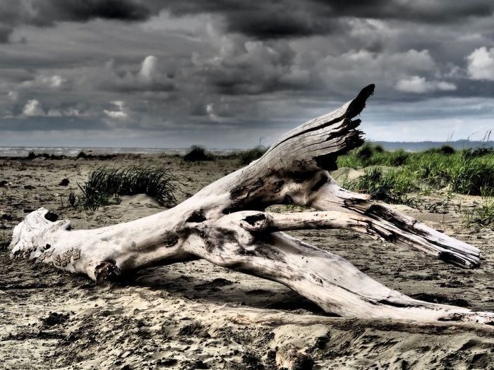 Beach Beauty In Nature Close-up Cloud - Sky Day Driftwood Beach Lying Down Mammal Nature No People One Animal Outdoors Sky