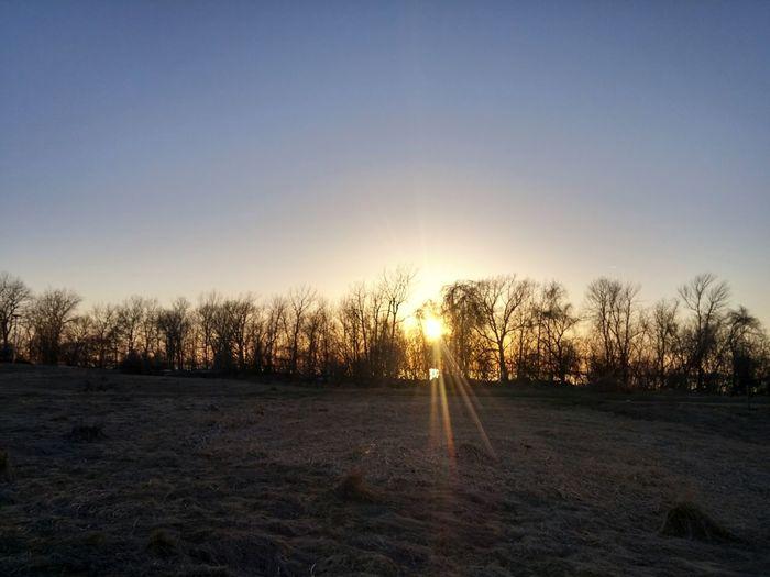 Coucher du Soleil en direct de l'île Cerfdevirginie Myjob Workingoutsideisthebest Sentier Deer Cerf Sky Plant Nature Tranquility Sunset Lens Flare Tranquil Scene Landscape Sunlight Tree Outdoors Environment Beauty In Nature Sunbeam Sun Field