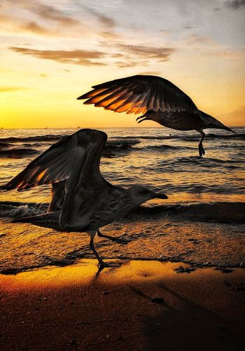 Bird Flying Sea