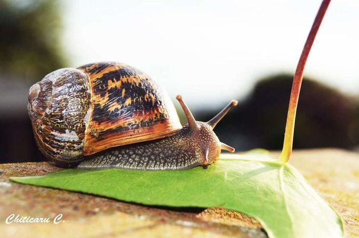 First Eyeem Photo Snail🐌 Colors Snail Photography Snailshell Snail Shell Snail Closeup Snail House Snails Having Fun Snails Adventure Leaf 🍂 Leafs Colors Berlin Love