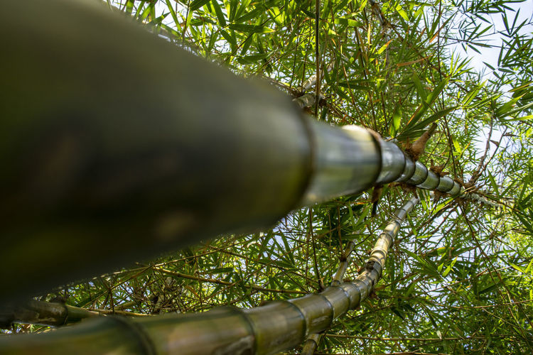 Close-up of pipe on tree