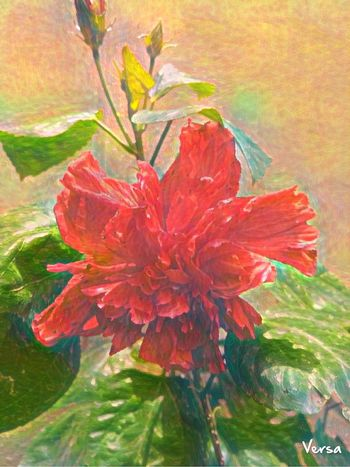 EyeEmNewHere EyEmselect Red Flower Flower Head Flower Painted Image Multi Colored Leaf Red Close-up Plant