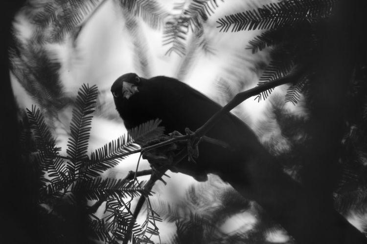 """""""Tierra de los muertos"""" De Cuervo Blackandwhite Animal Wildlife Bird Nature Animals Nature"""