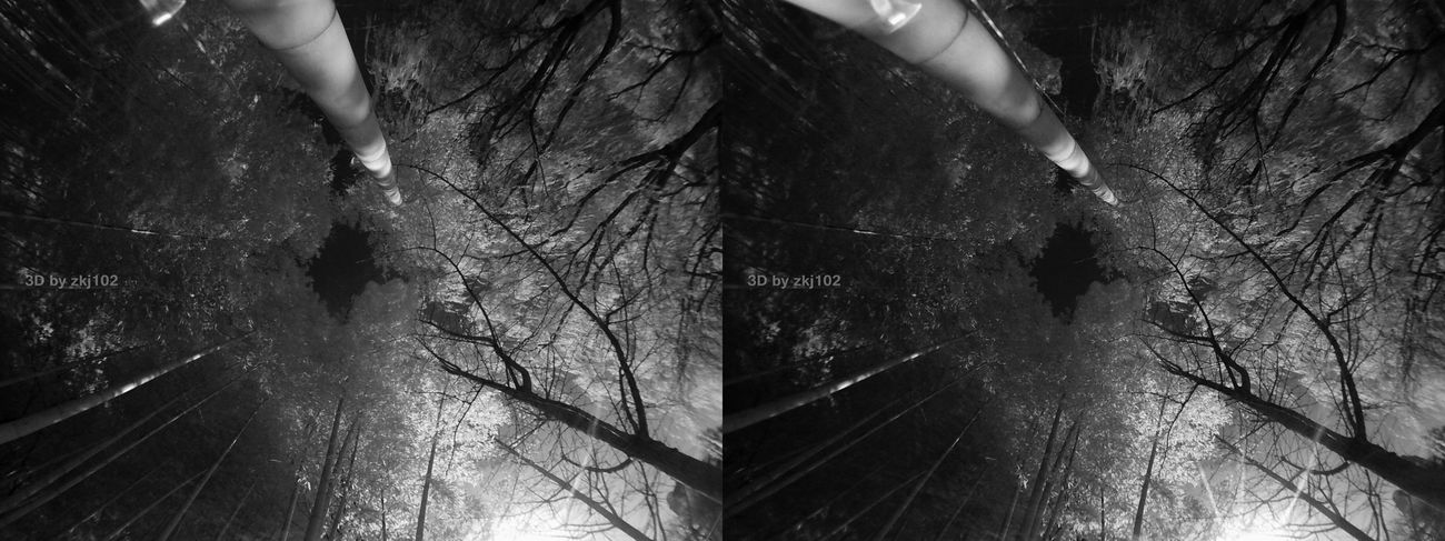 sunny Sunny Day Sunlight Sun Street Photography Stereo Stereoscopic Photography Sky Tree IR Infared Infrared Photography Two Cameras Vr 3D Art 3D Photo Stereoscopic Photo Real People Indoors  One Person Only Women People Adults Only