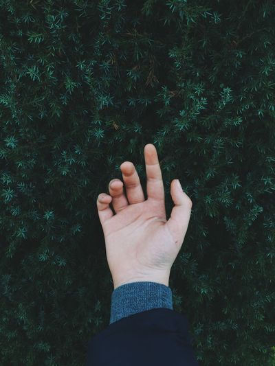 Close-up of human hand against plant
