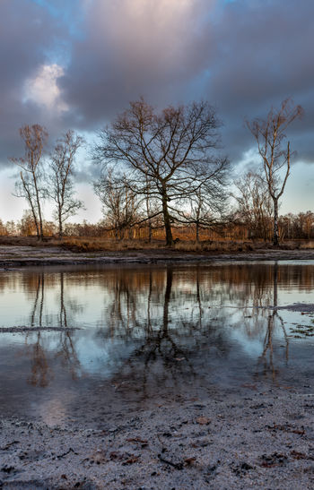 Water Tree Tranquility Reflection Lake Beauty In Nature Sky Scenics - Nature Nature Outdoors Netherlands Staatsbosbeheer