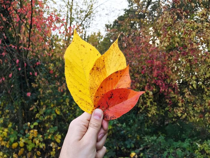 Autumn Leaves Leaves Autumn Human Hand Human Body Part Real People Holding One Person Human Finger Personal Perspective Unrecognizable Person Focus On Foreground Close-up Outdoors Day Freshness People