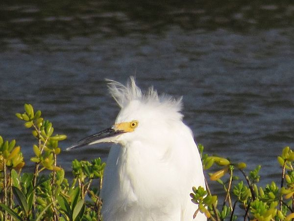 Bird Animal Themes One Animal Animals In The Wild White Color Close-up Taking Photos Rockport Texas Bird Photography Windy Day Nature Beak Beauty In Nature Zoology Focus On Foreground Day Animal Head  Outdoors Tranquility No People Green Color Water Surface