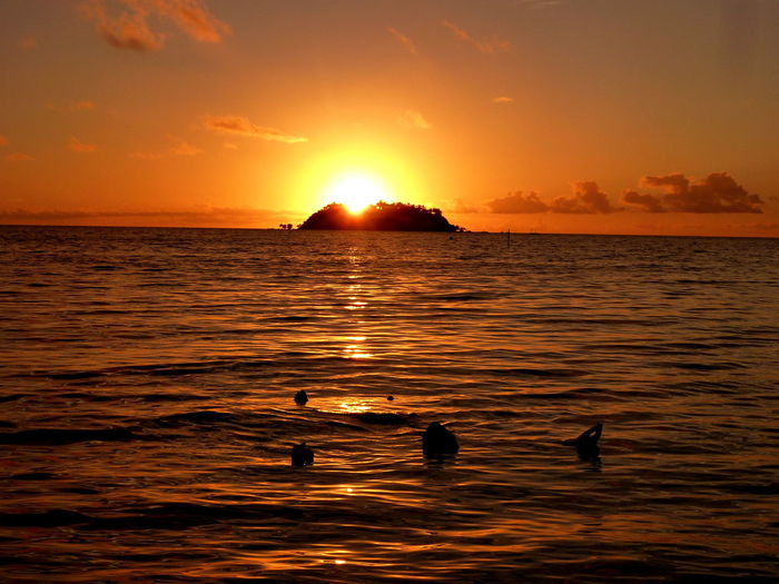 Fiji Tropical Paradise Tropical Island Water Sunset Sky Sea Beauty In Nature Scenics - Nature Silhouette Orange Color Animals In The Wild Swimming Tranquility Animal Themes Bird Tranquil Scene Animal Wildlife Nature Waterfront Sun Vertebrate Horizon Over Water Outdoors No People