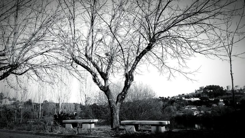 Tree River Loveit Blackandwhite Eyeemnature Eyeemnaturelover Naturelover Nature Editing PhonePhotography EyeEm Phonecamera My Side From My Point Of View Point Of View Perspective Portugalcomefeitos Igersportugal Showcase: February