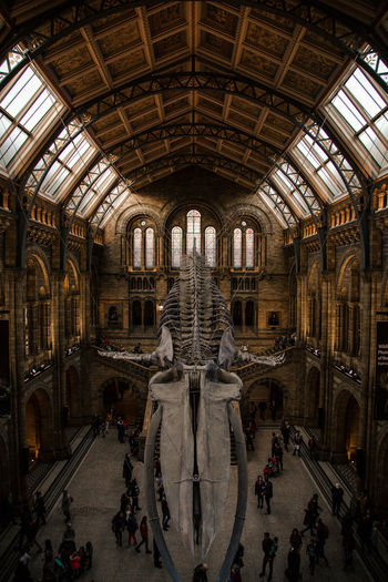 the skeleton of a blue whale Natural History Museum London United Kingdom Fossil Skeleton Blue Whale Skeleton Architecture Architecture_collection The Architect - 2018 EyeEm Awards Light Light And Shadow Antique Museum Golden Light Perspective Lines Leading Lines Building Historic
